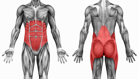 Muscles of the Core provide stability, strength and movement.